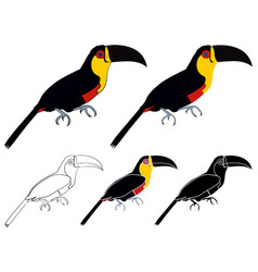 Yellow breasted toucan in profile view vector