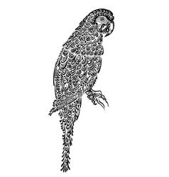 decorated parrot bird black vector image