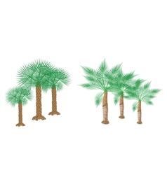 Isometric Palm Trees vector image vector image