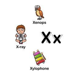 alphabet letter x-xenops x-ray xylophone vector image