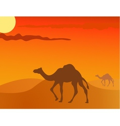 camel in the savanna vector image