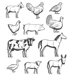 cattle farm animals and birds vector image