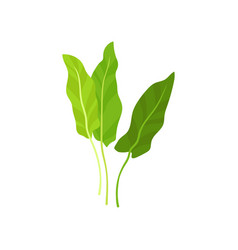 flat icon of fresh garden sorrel bright vector image