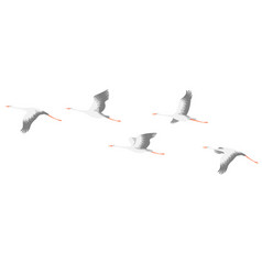 Flying stork flock vector