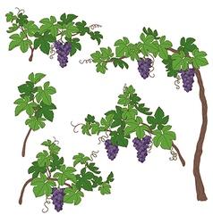 Grape bush vector
