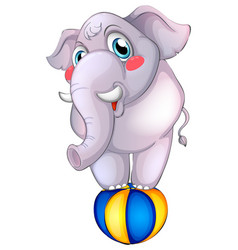 gray elephant on ball on white background vector image