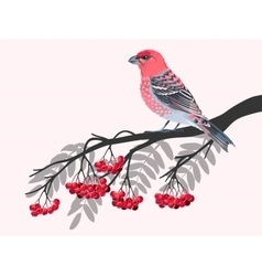 Bird on rowan branch vector image