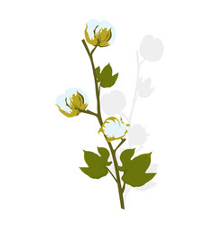 Cotton flower branch with green leaves stoc vector
