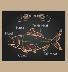 Salmon cuts vector