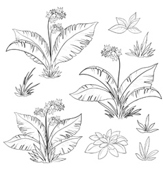 Flowers and grass set contours vector image vector image