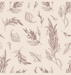 Botanical seamless pattern with quinoa or amaranth vector