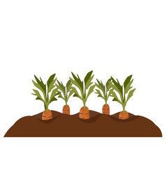 Carrots in the garden bed vector