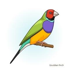 Gouldian finch bird educational game vector