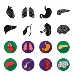 Liver gallbladder kidney brain human organs vector
