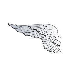 spread out eagle wing or angel wing isolated on vector image