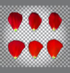 Set of naturalistic rose petals on transparent vector