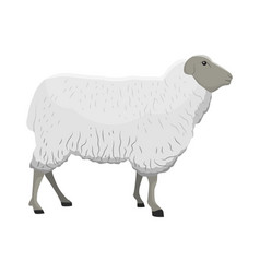 A sheep vector