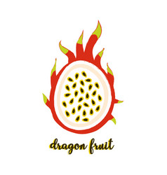 dragon fruit on white vector image