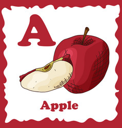 fruit alphabet for education vector image