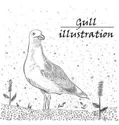 Gull ink on the white background vector