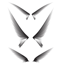 Set gray wings design element vector image