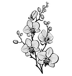 Sketch orchid flowers vector