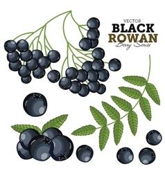 Black rowan set vector