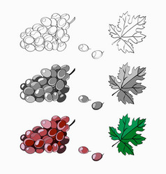 set brush grapes are purple vector image