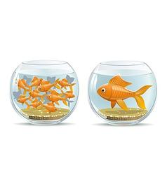 Aquarium comparison vector