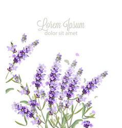 Lavender card watercolor flowers bouquet vector