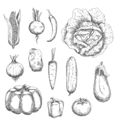 Retro sketches of garden vegetables vector