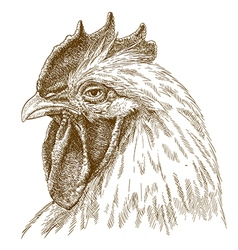engraving rooster head vector image vector image
