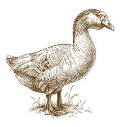 engraving big goose vector image vector image