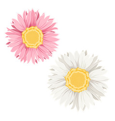 yellow pink flowers vector image