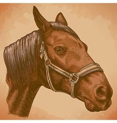 Engraving horse head retro vector