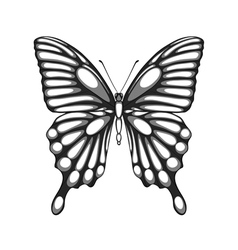 black and white butterfly with watercolor effect vector image