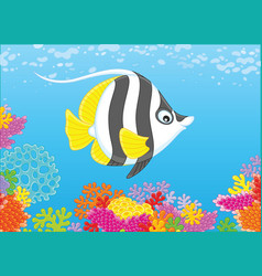 butterfly fish on a reef vector image