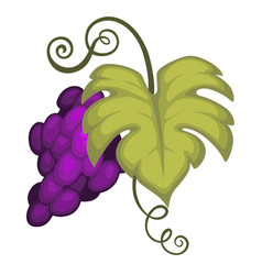 Grape bunch isolated icon winemaking and fruit vector