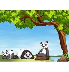 Pandas sitting under the tree vector