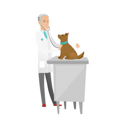 senior caucasian veterinarian examining dog vector image
