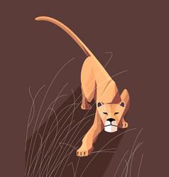 Sneaking lioness vector