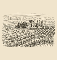 vineyard landscape sketch hand drawn vintage vector image