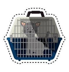 cute cat in transport box vector image