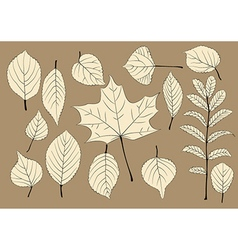 Autumn leaves silhouettes vector image