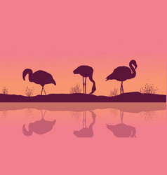 riverbank landscape with flamingo silhouettes vector image