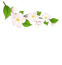 Pastel Apple Tree Flowers vector image vector image