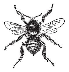 Bumblebee vintage vector