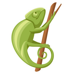 cartoon chameleon climb on branch small green vector image