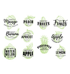 exotic fruits market lettering sketch vector image