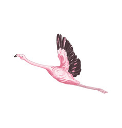 Flying flamingo exotic bird vector